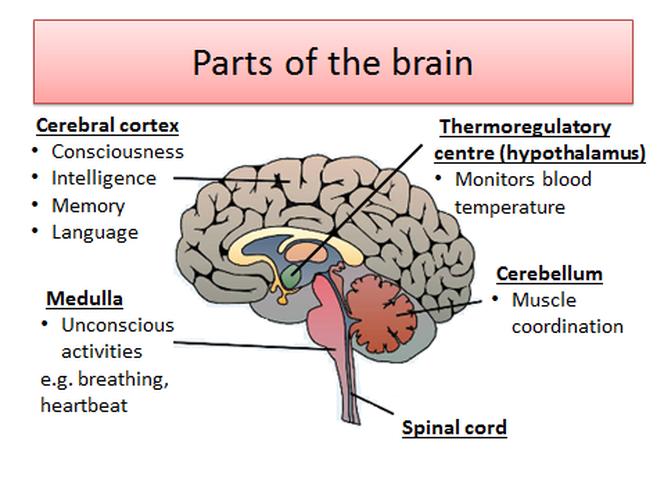 5. Homeostasis and response - THOMAS TALLIS SCIENCE